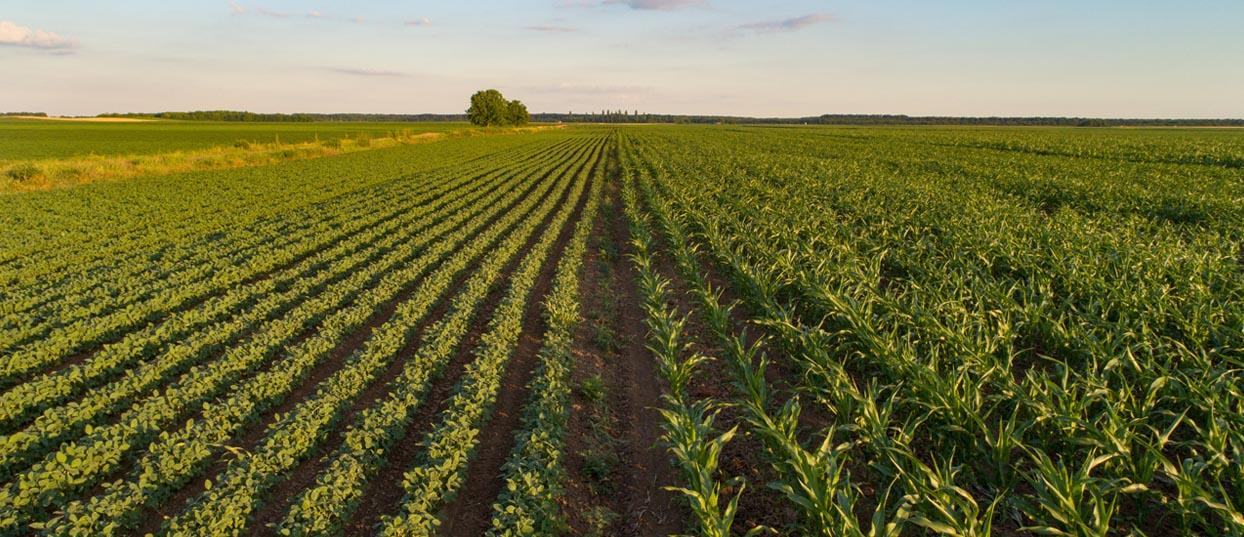 Agriculture et alimentation : Un projet de loi qui divise